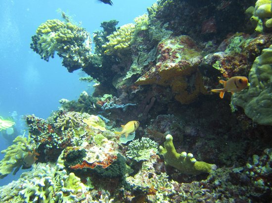 18 picture of raja laut dive resort bunaken island tripadvisor - Raja laut dive resort ...