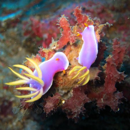 9 picture of raja laut dive resort bunaken island tripadvisor - Raja laut dive resort ...