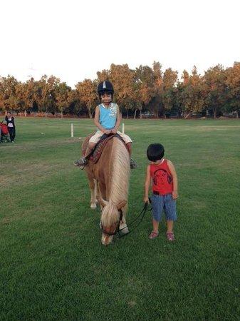 Ain Al Faida One To One Hotel And Resort: joky