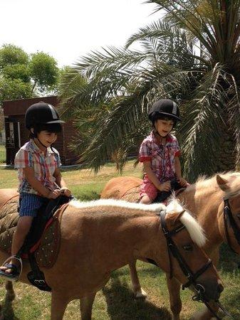 Ain Al Faida One To One Hotel And Resort: sport