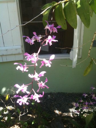 SeaGate Hotel: Flowers on the grounds