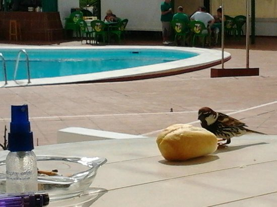 Luz y Mar Apartments: Friendly Birds eating bread off our patio table