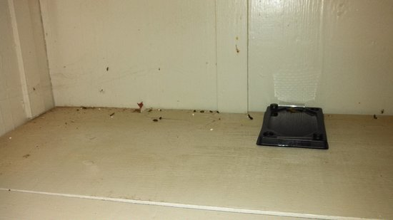 Waimea Plantation Cottages: Rat droppings in cupboard