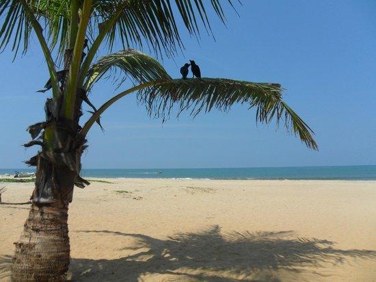 The Beach Lodge & Restaurant: View from beach lounger