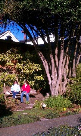Sea Gull Inn Bed and Breakfast: Tree In Front Garden