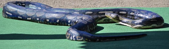 Out of Africa Wildlife Park: Anaconda Snake