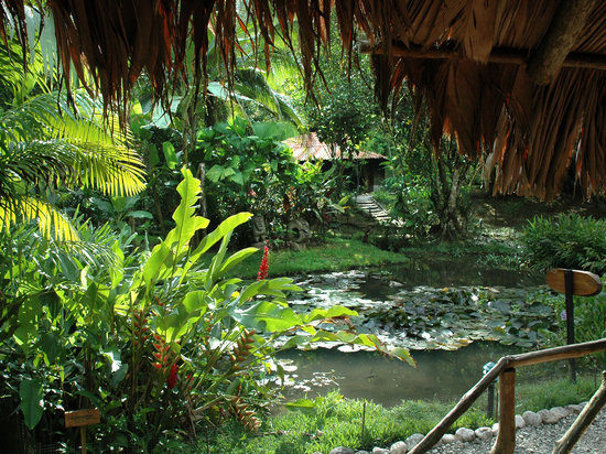 Esquinas Rainforest Lodge: The tropical garden attracts more than 200 bird species