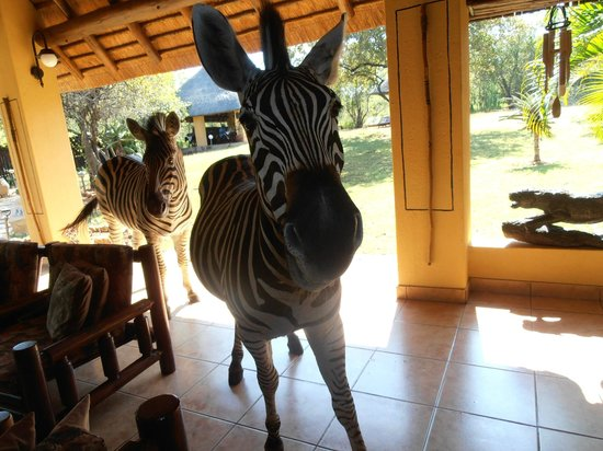 Royal Kruger Lodge: Our breakfast guest