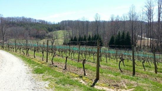Crane Creek Vineyards: Overlooking the vineyards