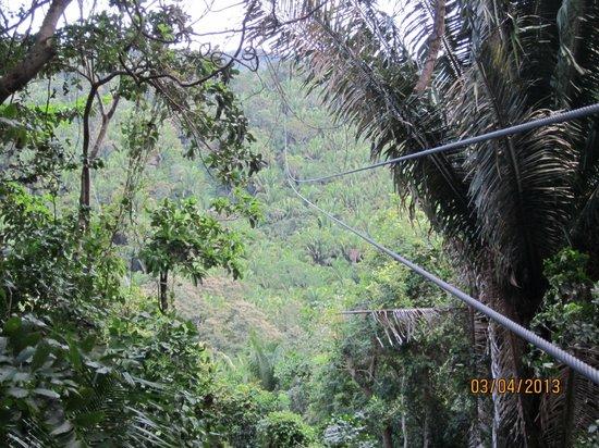 Caribe Sky Canopy Tour : Zip line view