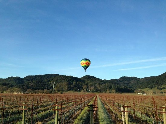Napa Valley Aloft Balloon Rides: Hill tops