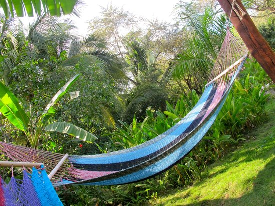 Harbor Reef Surf Resort: Hammocks near the pool