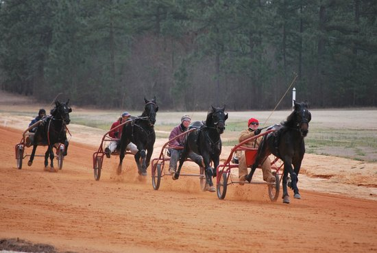 Pinehurst Harness Track: Youngsters training on the mile track