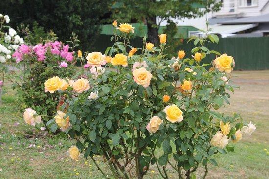 Catholic St. Patrick's Akaroa : roses