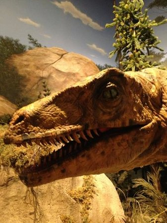 Creation Museum: Dinosaurs on the Ark?!