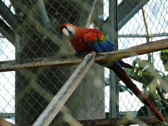 CIGS Zoo: Animais do Zoológico do CIGS