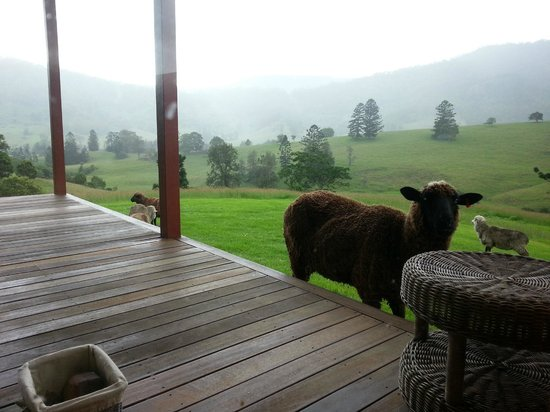 Worendo Cottages: An up close cute visitor
