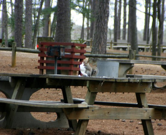 Fort Yargo State Park: Picnic area