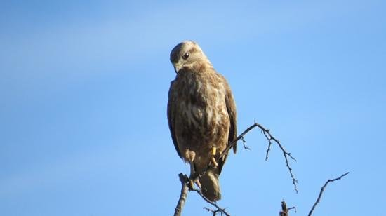Lions Valley Lodge: lots of birds too