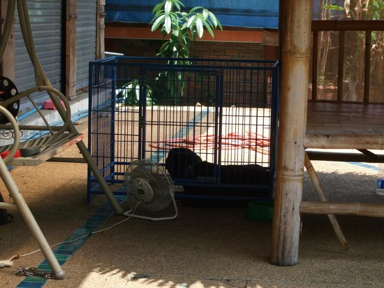 Gajanana/Dolce Vita Restaurant & Bar: The dog with his own electric fan
