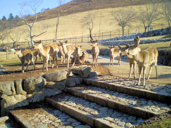 Kotonoyado Musashino : 朝の散歩で鹿と戯れる