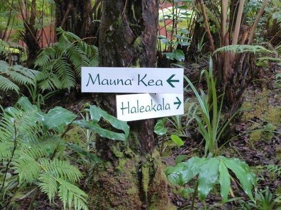 Volcano Village Lodge : Path to lodge