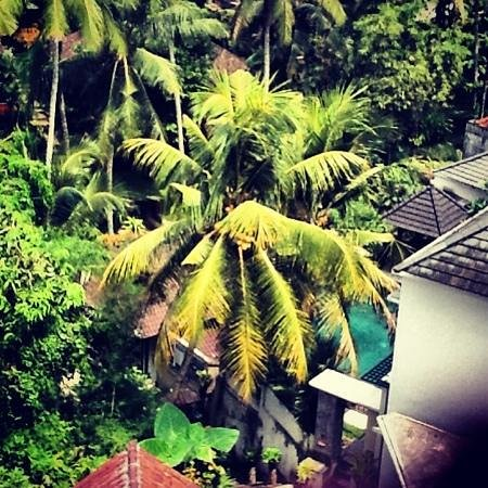 Gayatri Bungalows: view from my room
