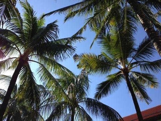 Conrad Bali: coconut trees aplenty