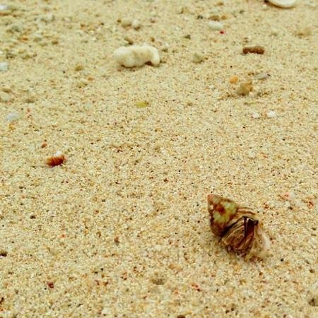 Nagamahama Beach Coast: 可愛い!