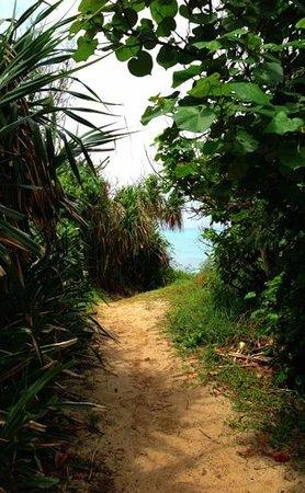 Nagamahama Beach Coast: 浜への道のり