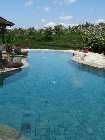 Cabé Bali: piscine avec vue sur rizières