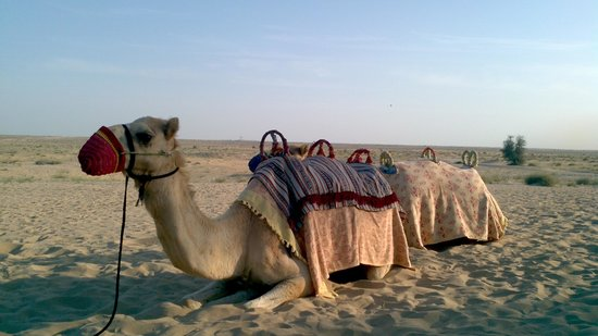 Bab Al Shams Desert Resort & Spa: Camel to ride