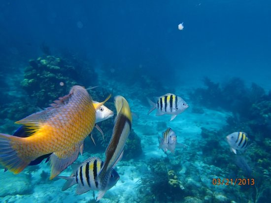 Snorkling picture of fat fish adventures grand cayman for Cholesterol in fish
