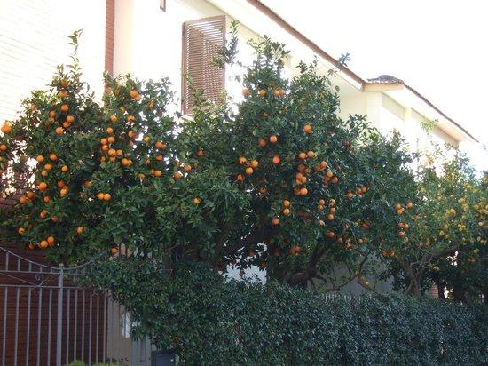 Hotel Florida: apelsinlunden!!