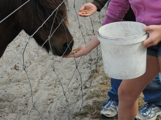 Kerriley Park Farmstay: Feeding time