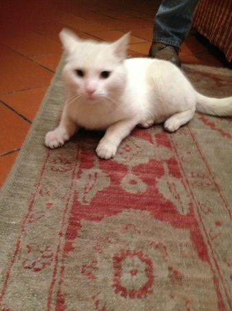 Hotel Porta San Mamolo: House cat!