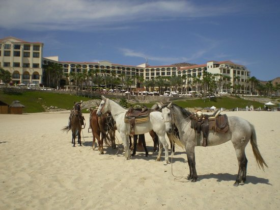 Melia Cabo Real All-Inclusive Beach & Golf Resort: Horses out on the beach.