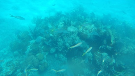 Playa Sirena: snorkel