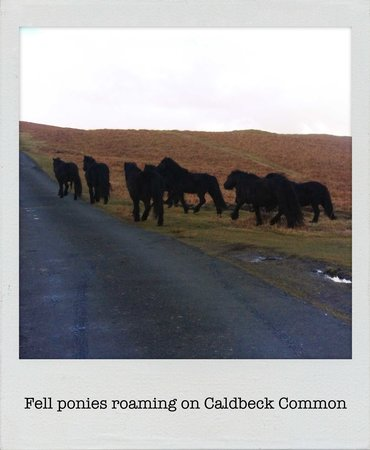 Avondale Guest House: Ponies on Calbeck Common