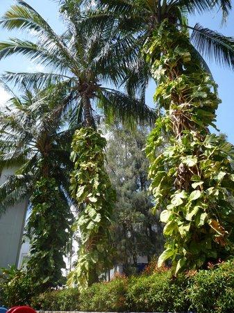 Banthai Beach Resort & Spa: à l'ombre des cocotiers !