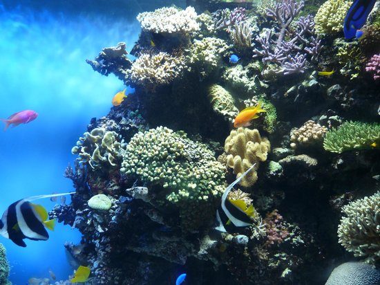 Flore Sous Marine Foto Di Monterey Bay Aquarium