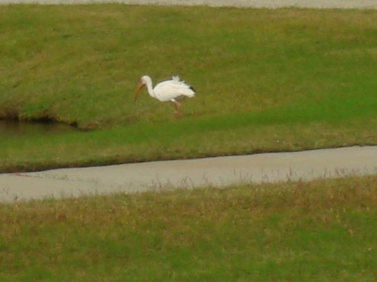 St. James Plantation: Abundant wildlife on Regency Crossing Ponds