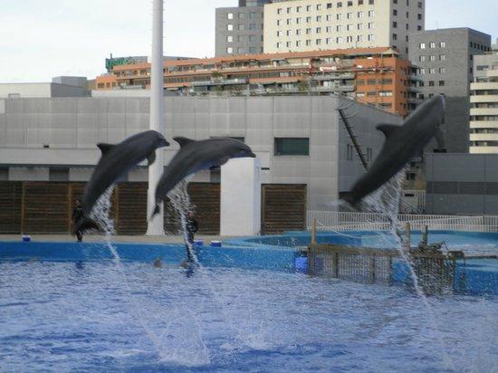 Valence, Espagne : Dolphin show