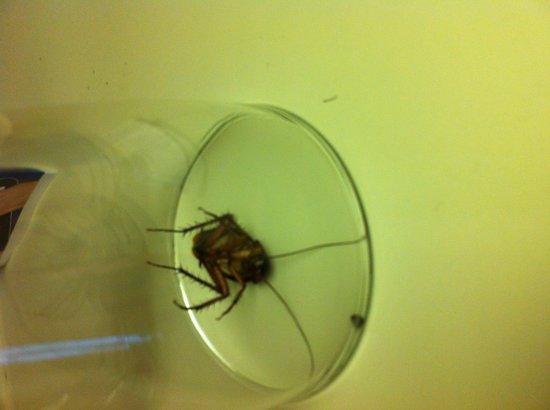 Sonesta ES Suites Orlando - International Drive: The last cockroach we found in children's room