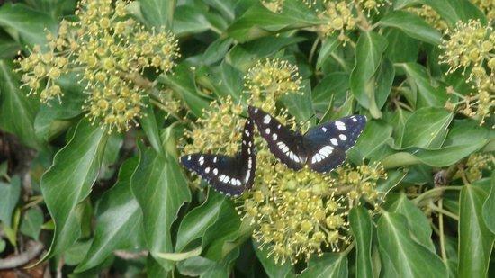Paklenica National Park : Mariposas en Paklenica