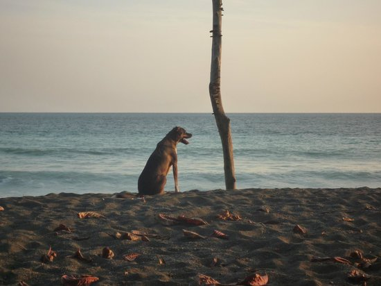 Lookout Inn Lodge : Rocco loves to play on the beach near sunset
