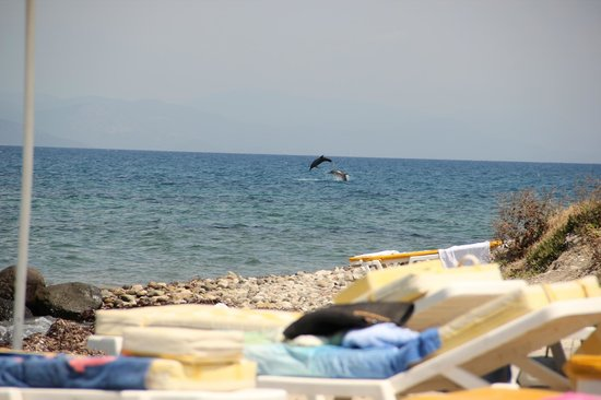 Niriides Beach Hotel: Beach