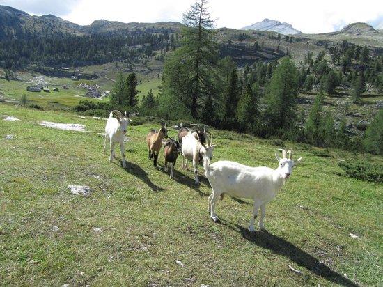 Alpe di Fanes: Vrije natuur2
