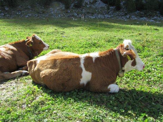 Alpe di Fanes: Vrije natuur4