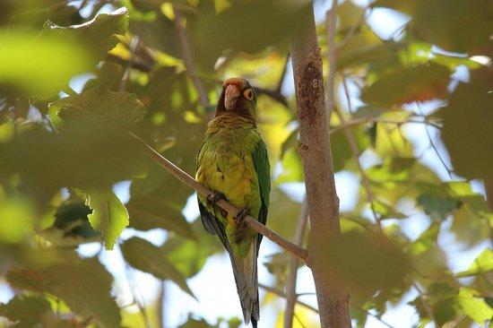 Allegro Papagayo: Pretty Parakeets.